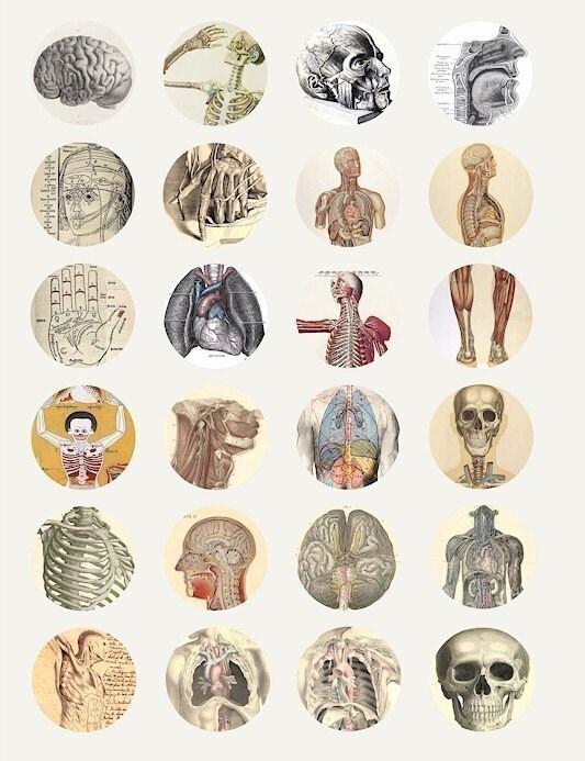 Science Human Anatomy