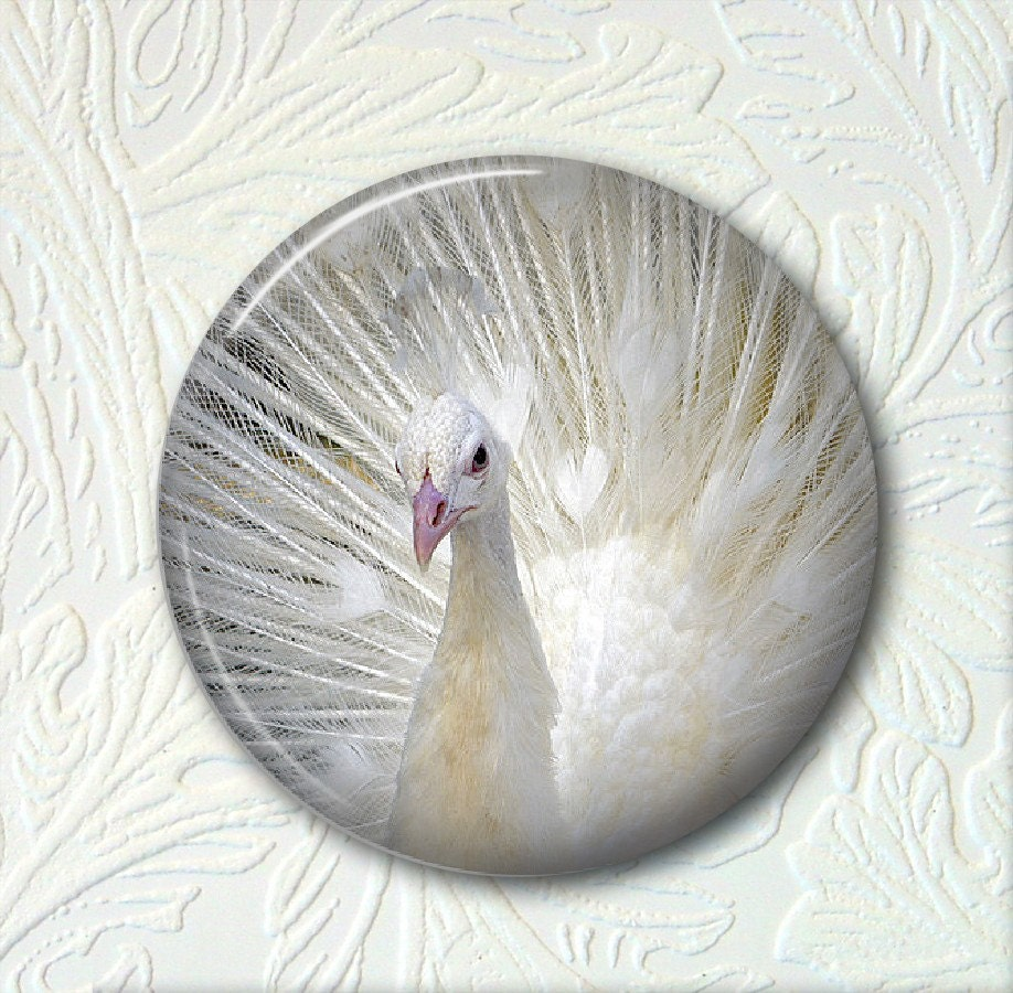 Pocket Mirror White Peacock 046 by SunnysGiftShop on Etsy mirror pocket