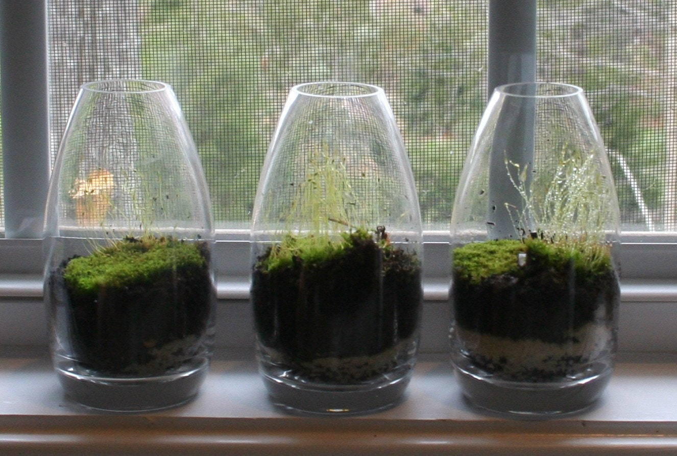 A trio of teardrop terrariums- 3 moss terrariums