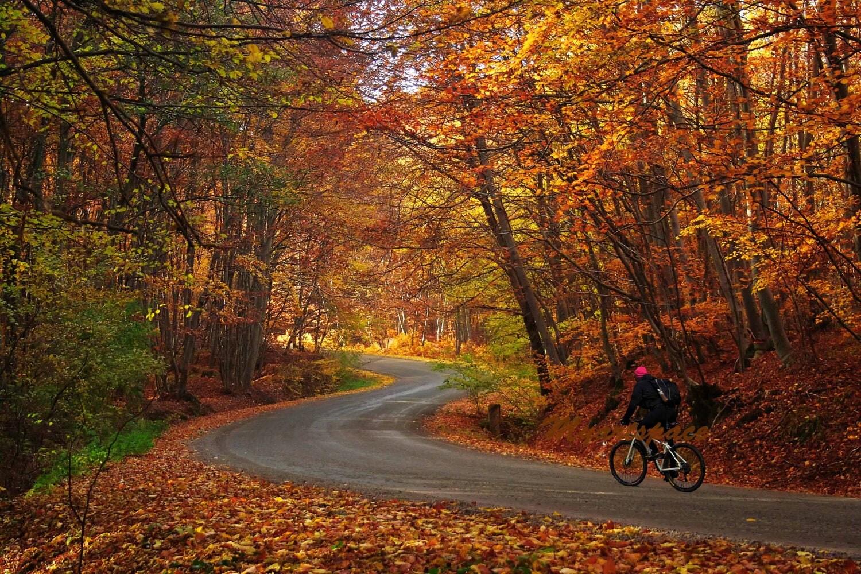Золотая осень фото на великах осенью 3