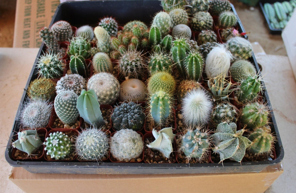 Popular items for cactus collection on Etsy