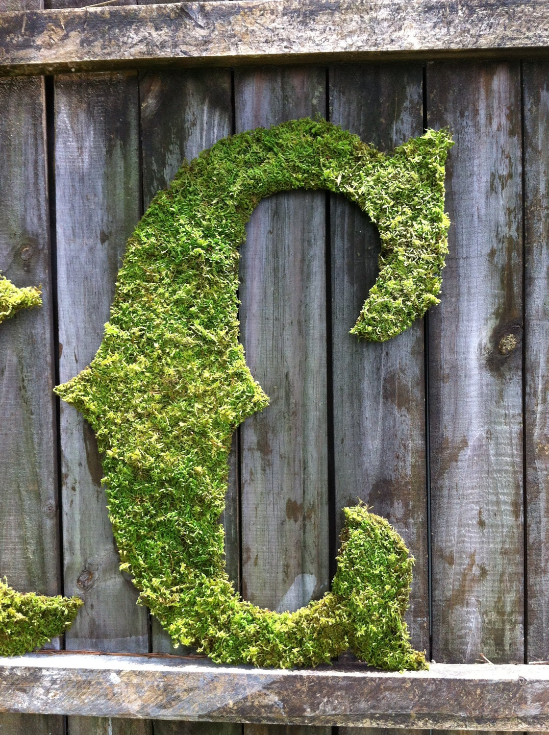 letters covered in moss