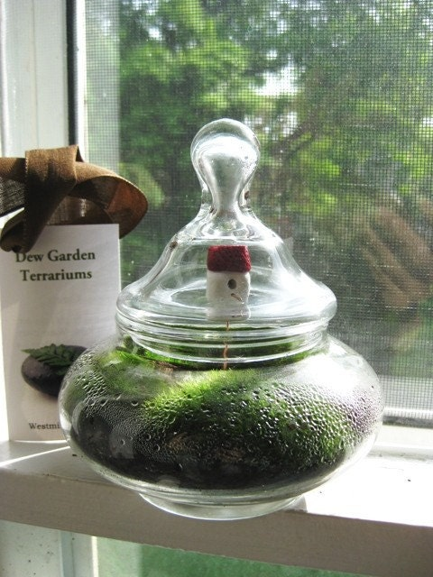 Squatty Terrarium with Red Roof Birdhouse Live Moss