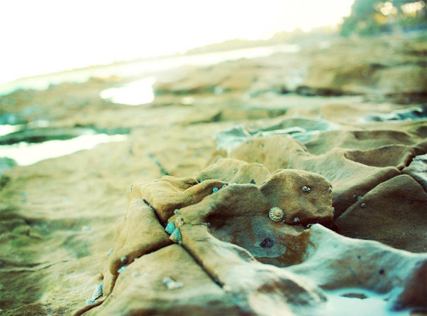 Beach Photo. Summer Décor. Fine Art Photography. Rocks. Shells. Bokeh. Sunny Australia. Holiday. Brown Teal. Size A4 - happeemonkee