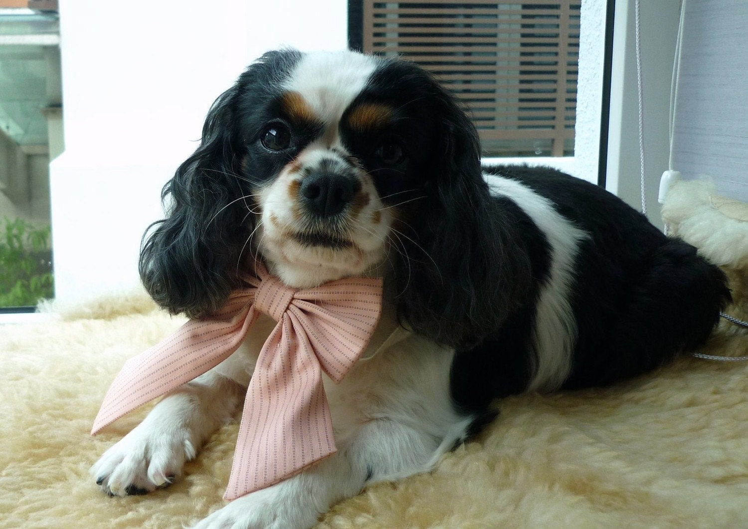 Peachy Pink Stripe Ribbon Bow Tie White Shirt Collar Set for Dogs or Cats - Custom Order