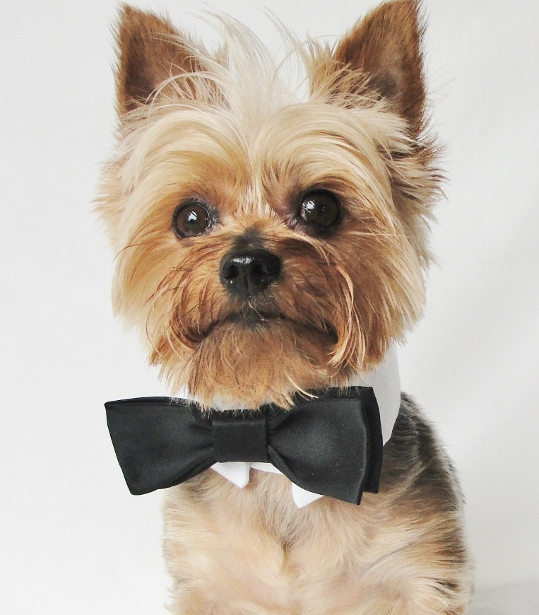 Doggie tux wedding