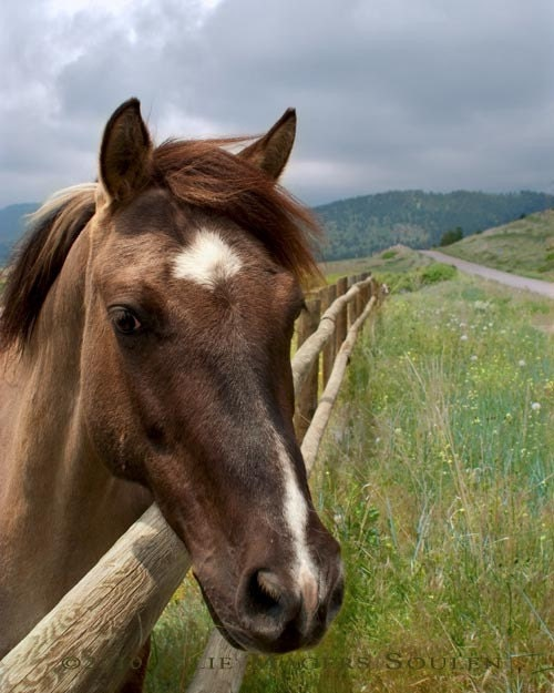 Colorado Horse Photo -Pretty Girl -8x10 Photograph-Fathers Day