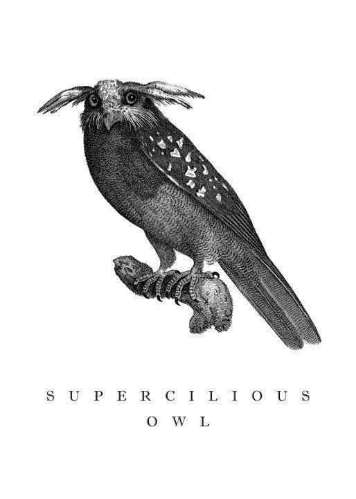 Supercilious Owl - Blank Card - 5x7