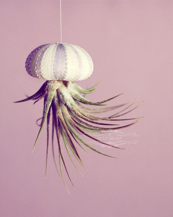 Small Air Plant in Stripey Purple Sea Urchin // Wedding Favor Decor Gift jellyfish stripes striped