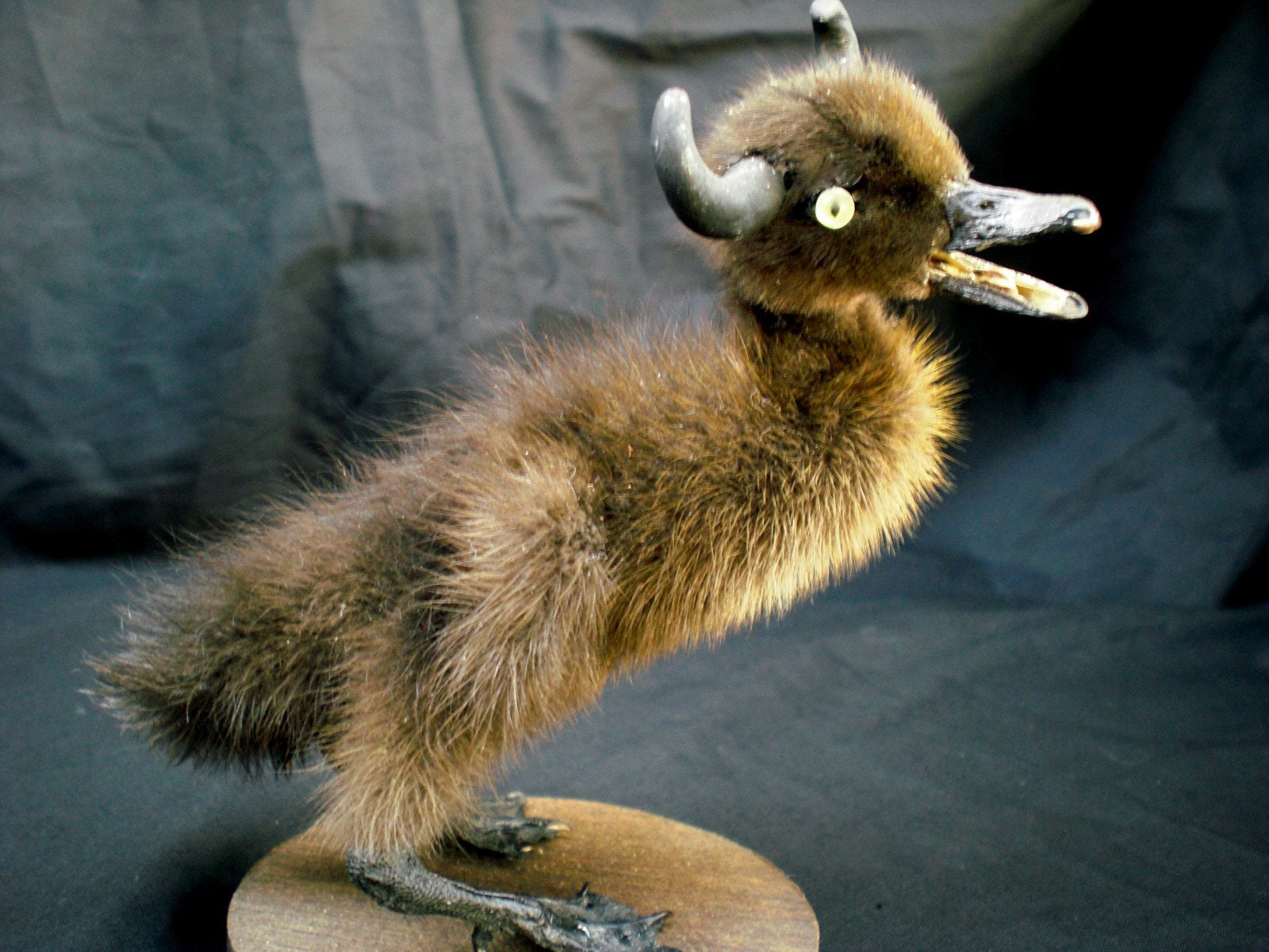 Horned Duckling Taxidermy
