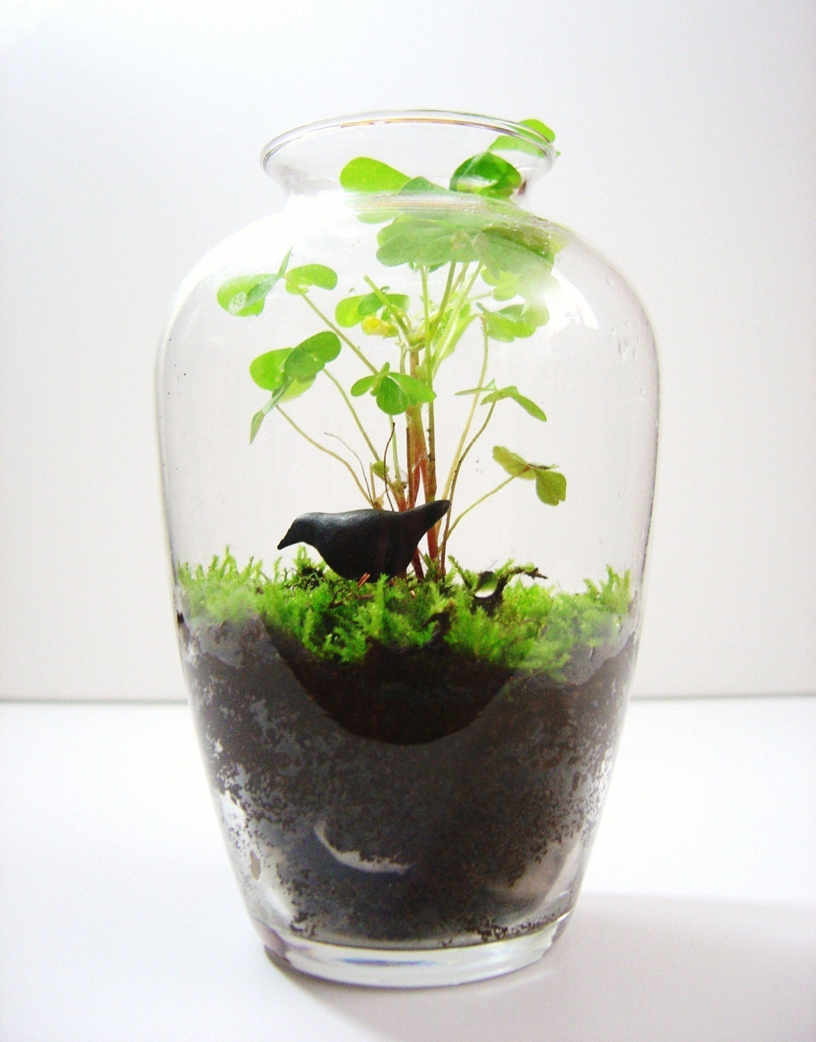 Raven For Your Terrarium