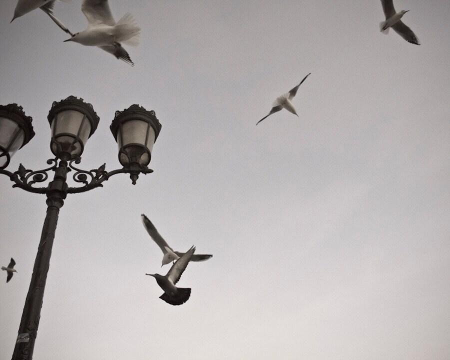 Paris Photography, Birds Over Notre Dame, Fine Art Print, Minimalist Wall Art, French Home Decor - LaPaperiePrintShop