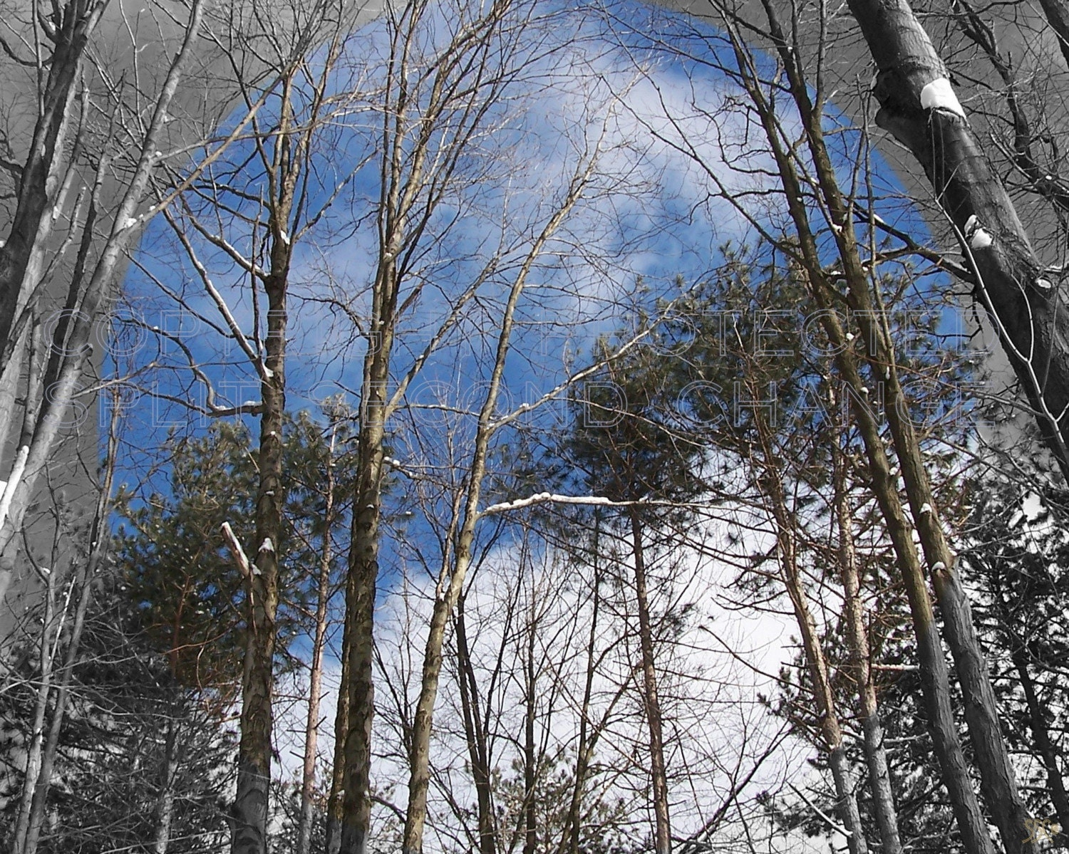ALLEGHENY NATIONAL FOREST........WINTER SKIES........ 8x10 PHOTOGRAPH