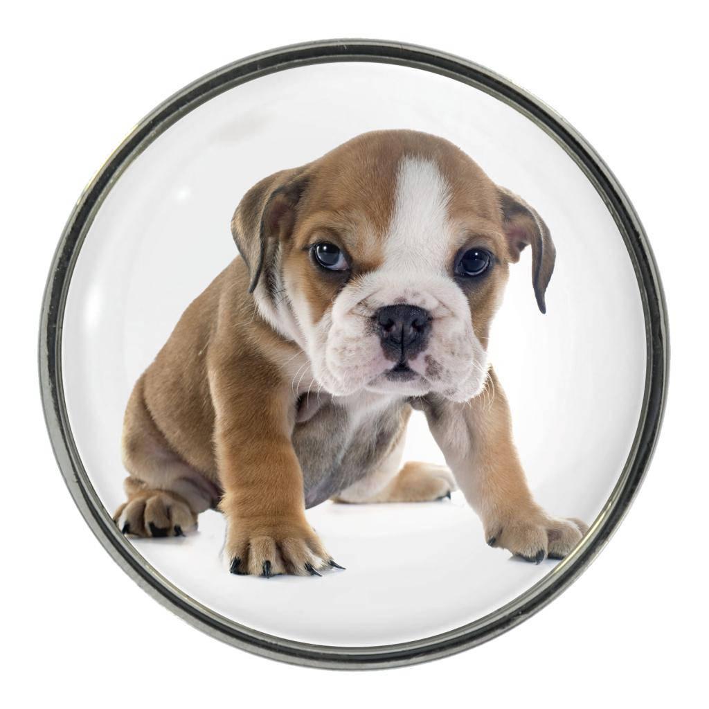 English Bulldog Puppy Image On Metal Pin Badge