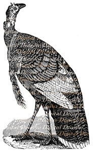 Turkey Bird Fowl Woodcut Style - Digital Image - Vintage Illustration - DigitaIDecades