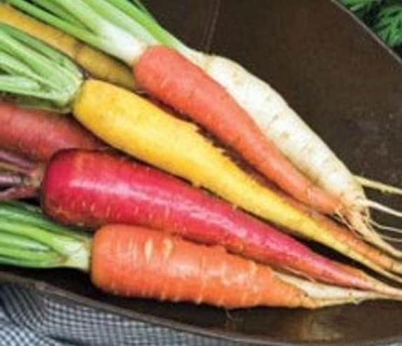 Organic Heirloom Rainbow Carrot Blend Seeds - BoxGardenOrganics