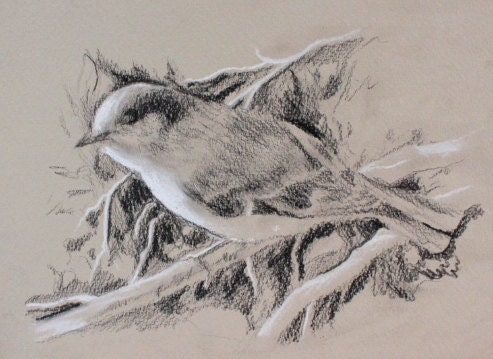 Items Similar To Original Charcoal Drawing Of Bird Small 6x8 On Etsy