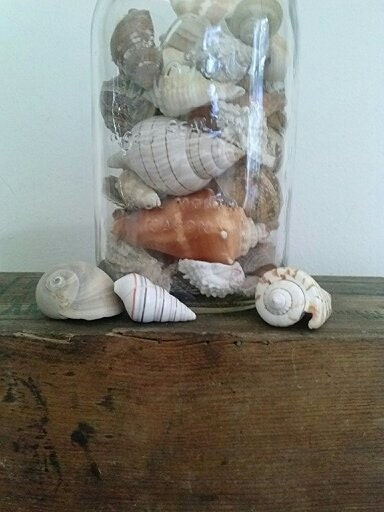 Mason Jar and Shells. Glass Mason Jar Filled with Beautiful Polished Shells. Cottage Decor. Ocean Decor. Gift from the Sea. Natural Decor - ANTHEMandOBJECT