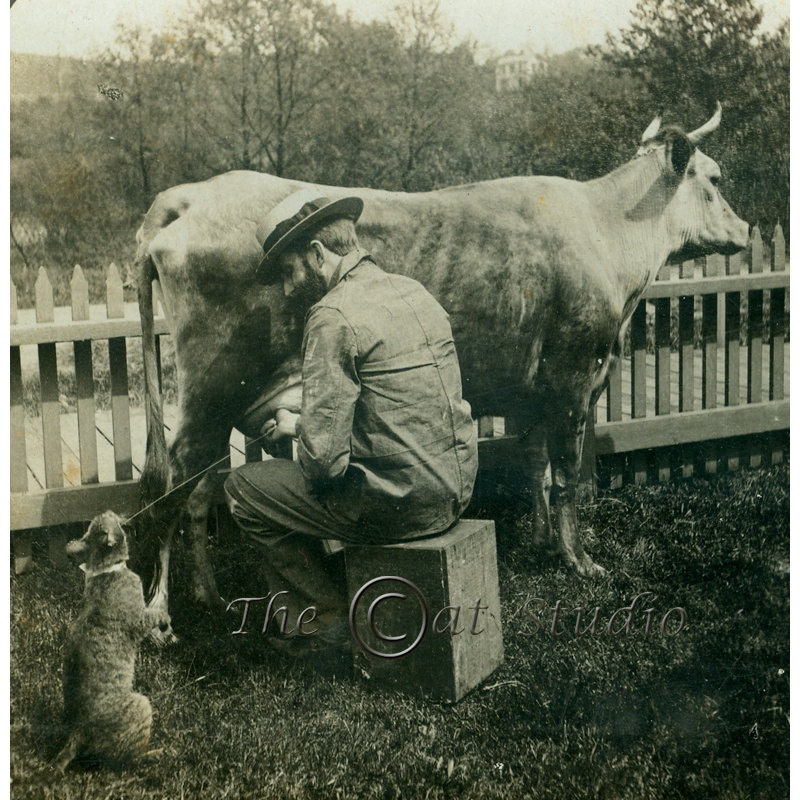 Cat and Cow Photo / Antique Photograph / Keystone Stereoview - TheCatStudio