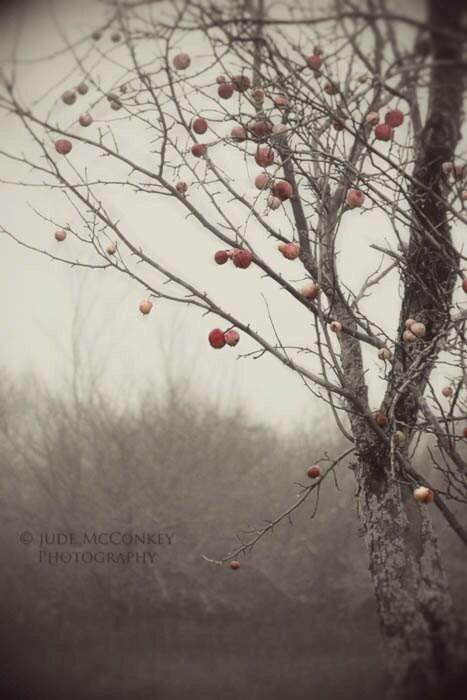 FREE US Shipping apple orchard monochrome fog landscape photography nature home decor office decor - judeMcConkeyPhotos