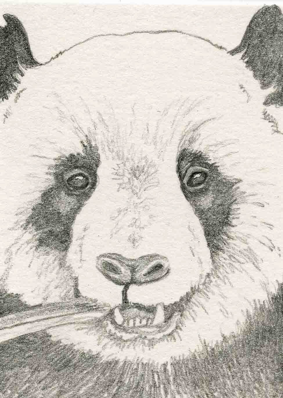 Request a custom order and have something made just for you Panda Drawing In Pencil