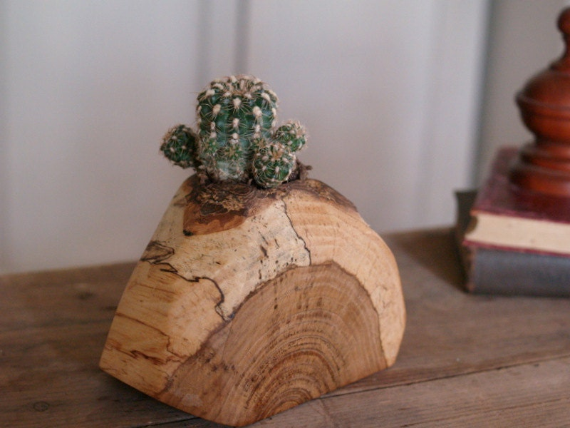 Rustic Cactus Pot Indoor Plant Holder By Cattailswoodwork