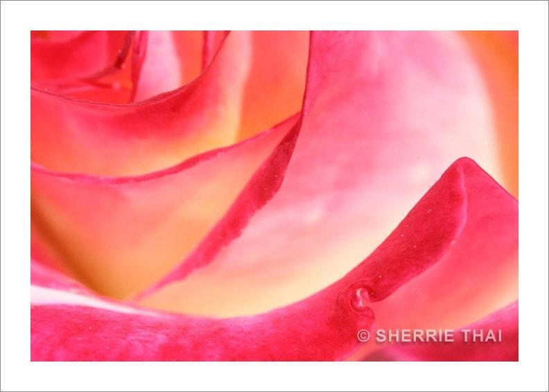 Rose Petals Photo Print
