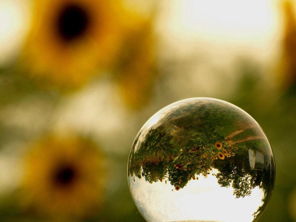 Notecard Gazing Ball Sunflowers