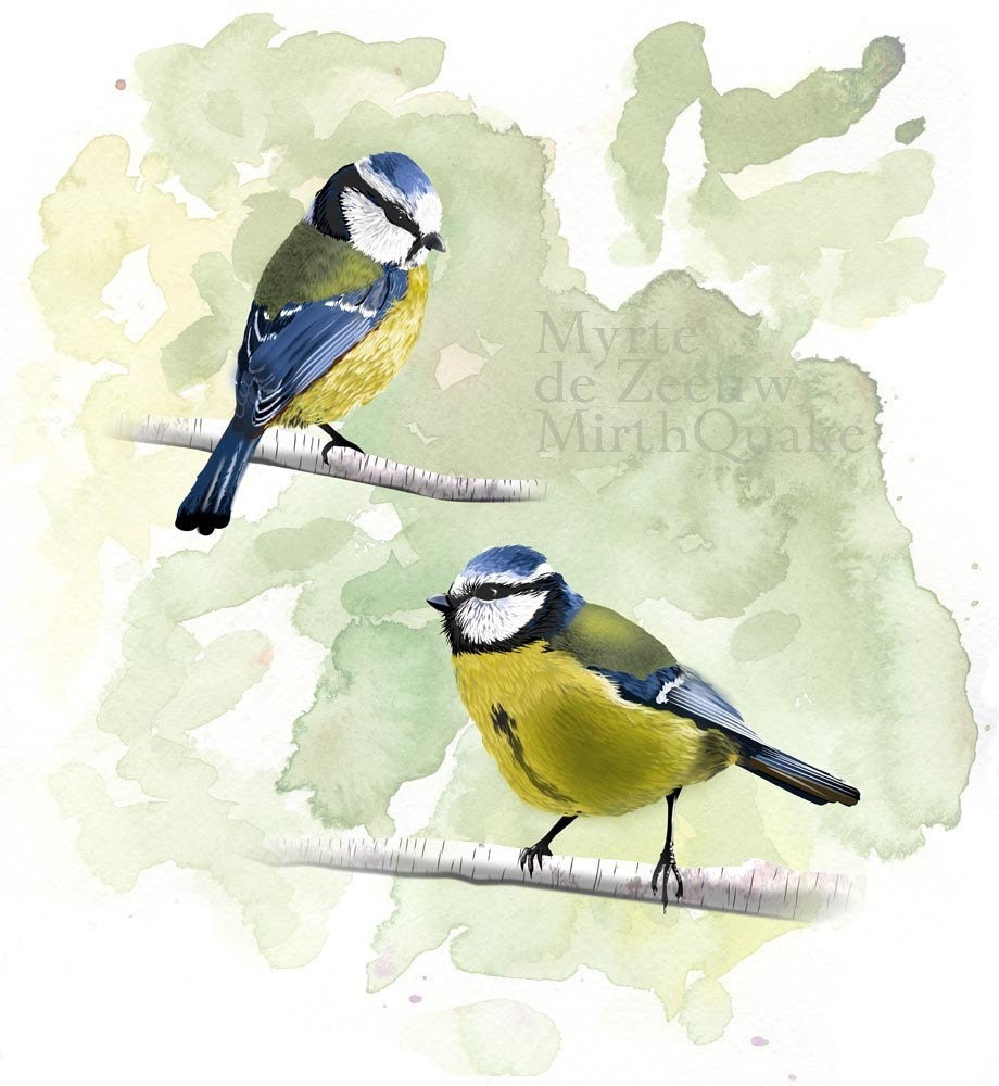 FINE ART Print Blue Tits 8x11 /A4 illustration - Limited Edition