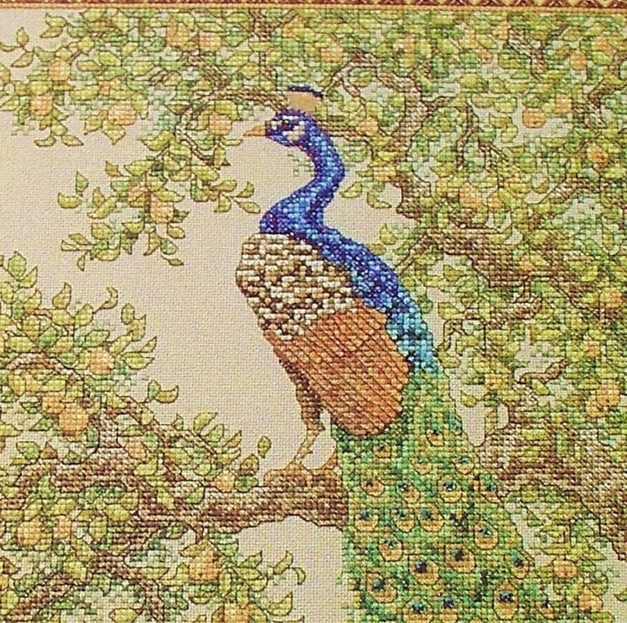 crossstitch pattern peacock wentzler