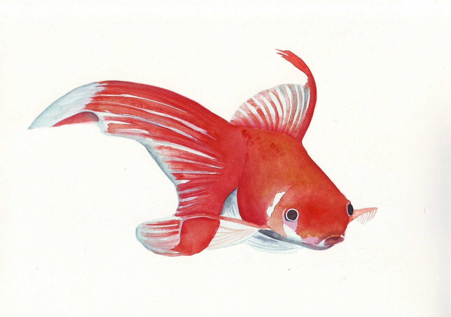 Goldfish ART  print of watercolor painting