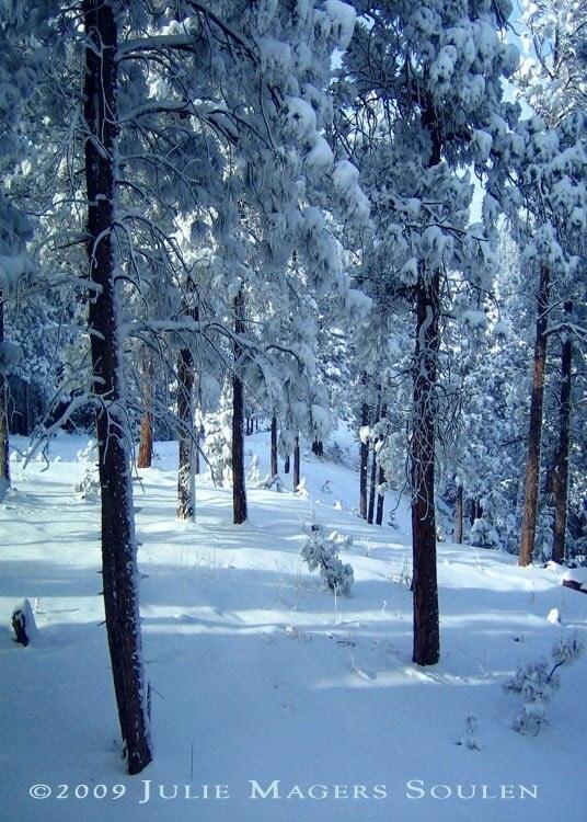 Colorado Winter Landscape Photo -Morning Snow -5X7 Photograph