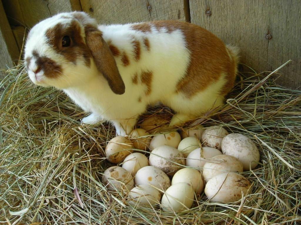Egg Gourds - Grow a Gourd Garden