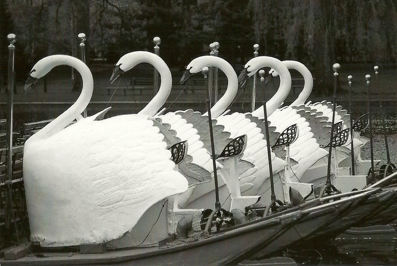 Boston Swan Boats  11 x14  Black and White Photograph Boston Public Gardens