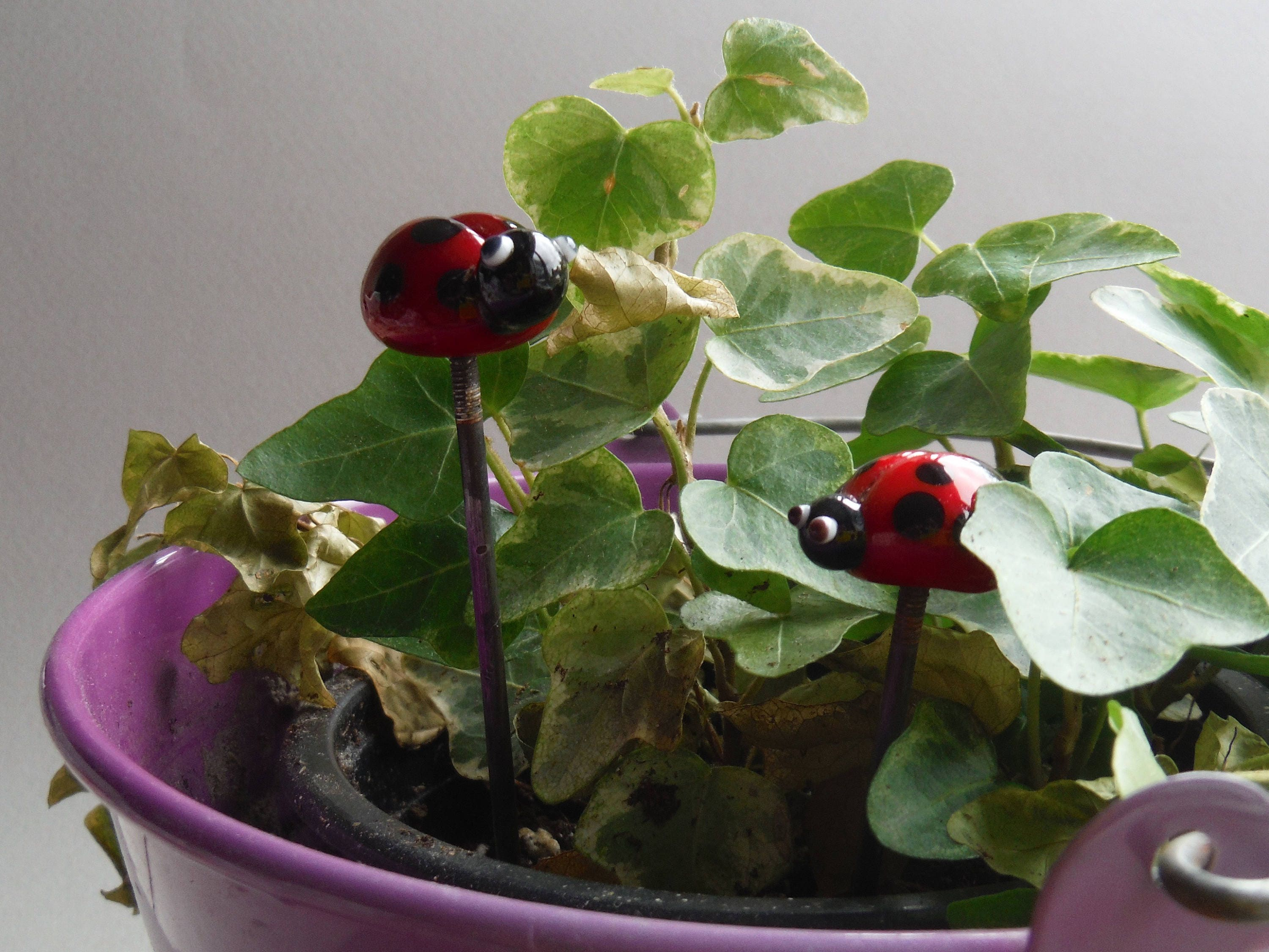 glass lady bird plant stake fairy garden  hair stake cake decoration