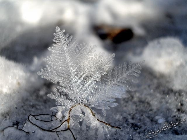 Ice crystal, Delicate Beauty, Fine Art Winter Photograph