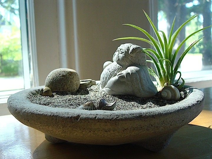 lucky pug buddha sculpture in zen garden air plant by. Black Bedroom Furniture Sets. Home Design Ideas