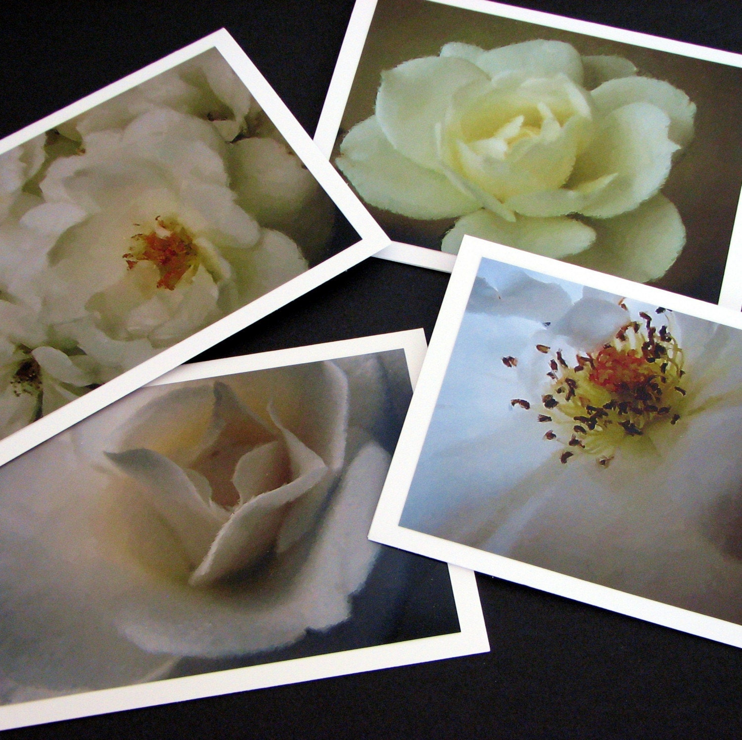 white rose greeting card set
