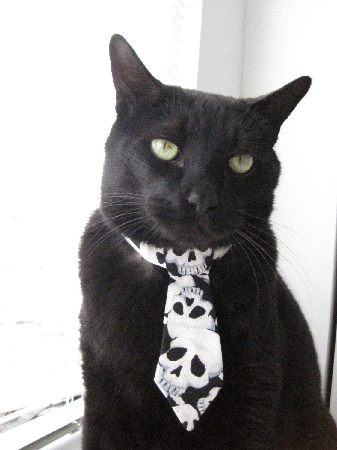 The Horror - Pet Tie