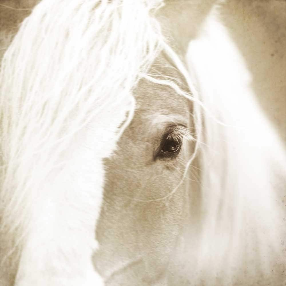 Horse photography, White horse photo, Horse looking out at the world, dreamy morning fog silver light shabby chic
