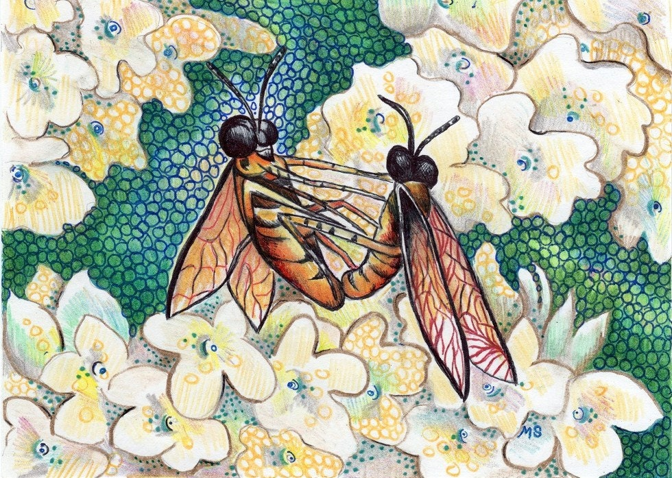 "Original Ink Drawing - Color Pencil Drawing - Bug Art - 5x7"" Bug Drawing - Flower Art - White Hydrangea - Michelebuttons"