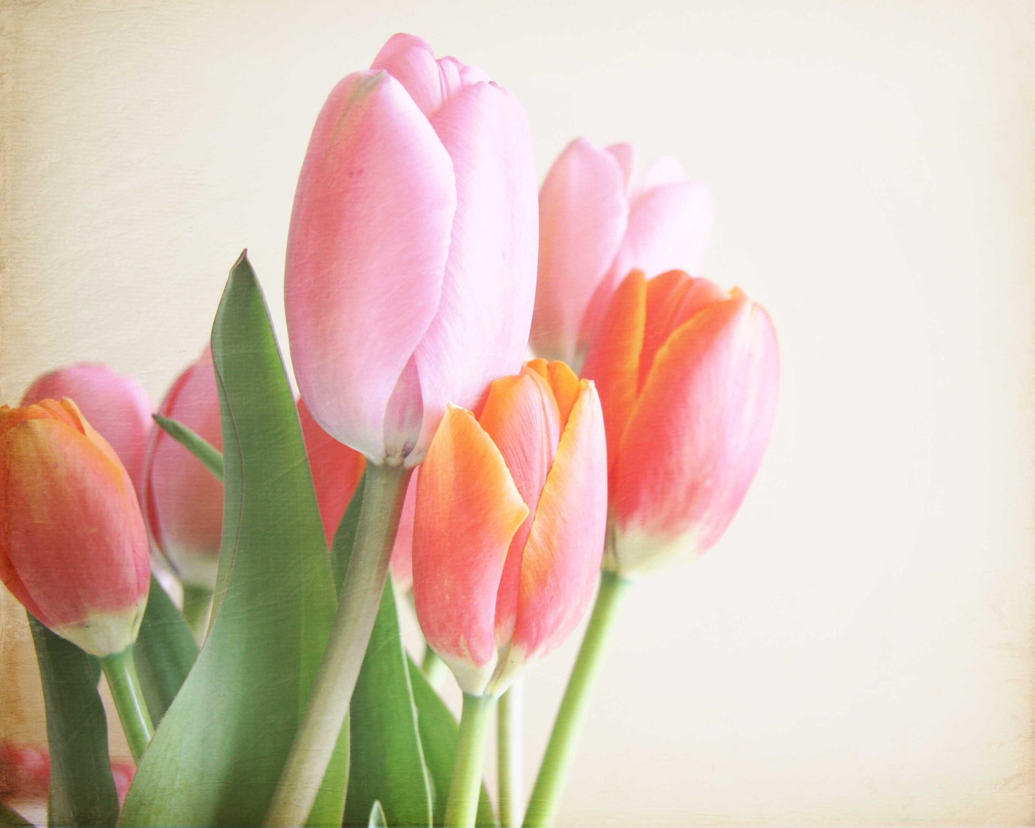 mothers day, spring, spring tulips, easter colours, pastel colors, peach, pink, flowers, blossoms, peach, green, 8x10 photo - trekkerjen