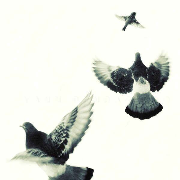 SALE, Black and white photography, Winter art, Black and white art, Bird print, Animals art,  Birds Flying, Print 6x6 (15x15cm)