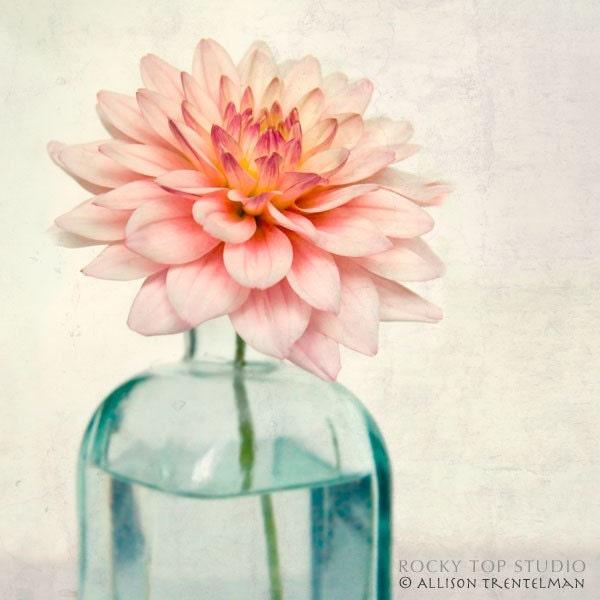 Pink Dahlia Still Life, Fine Art Photography Print