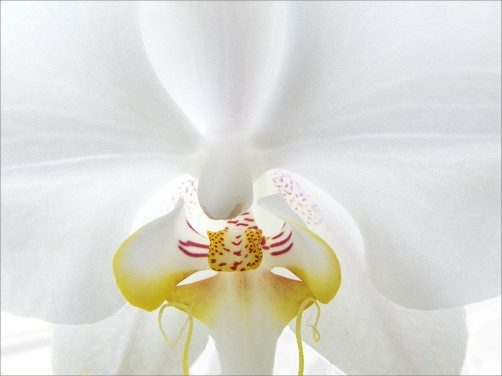 White Orchid, Fine Art Photograph Note Card