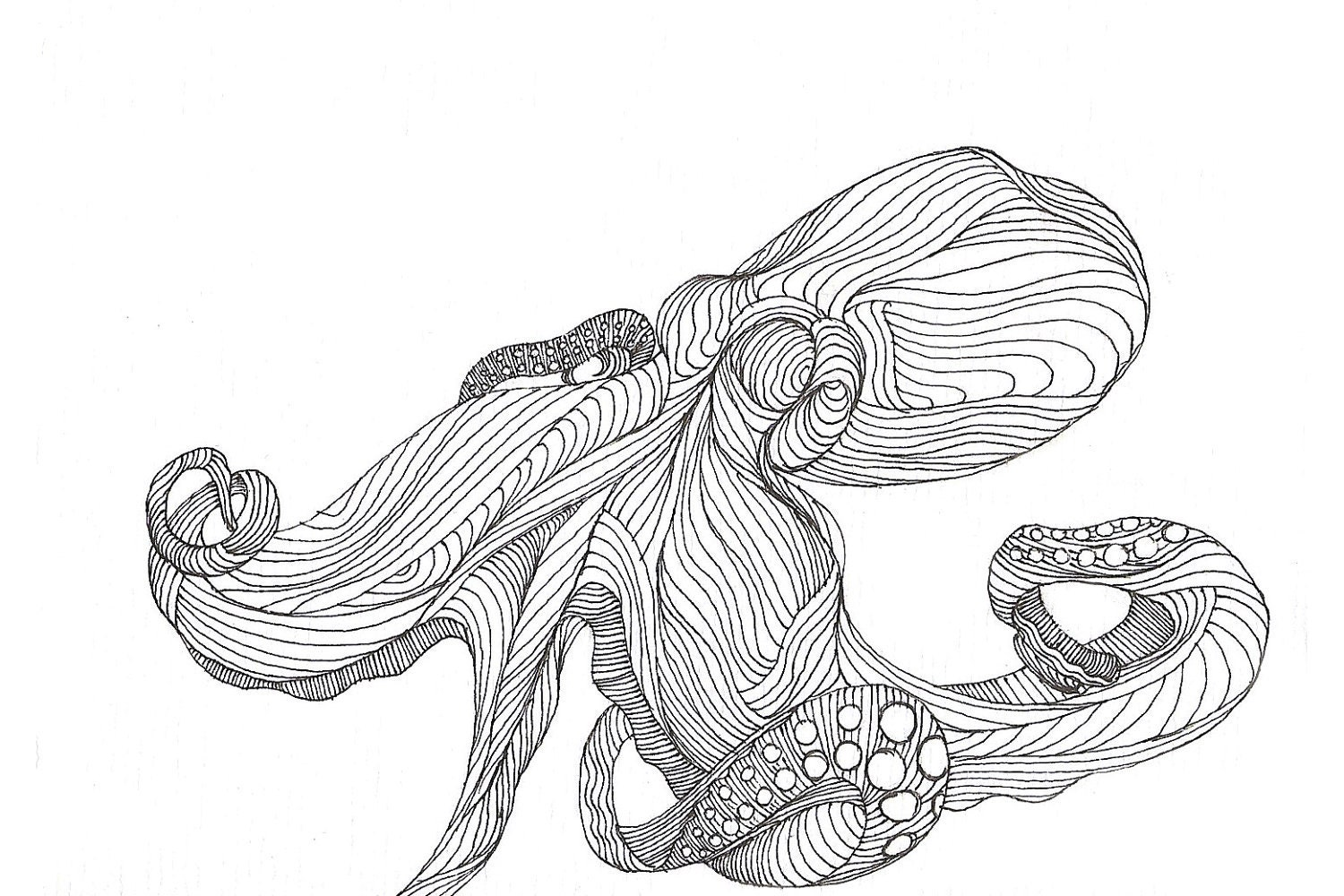Octopus Drawings Black And White Octopus drawing - in