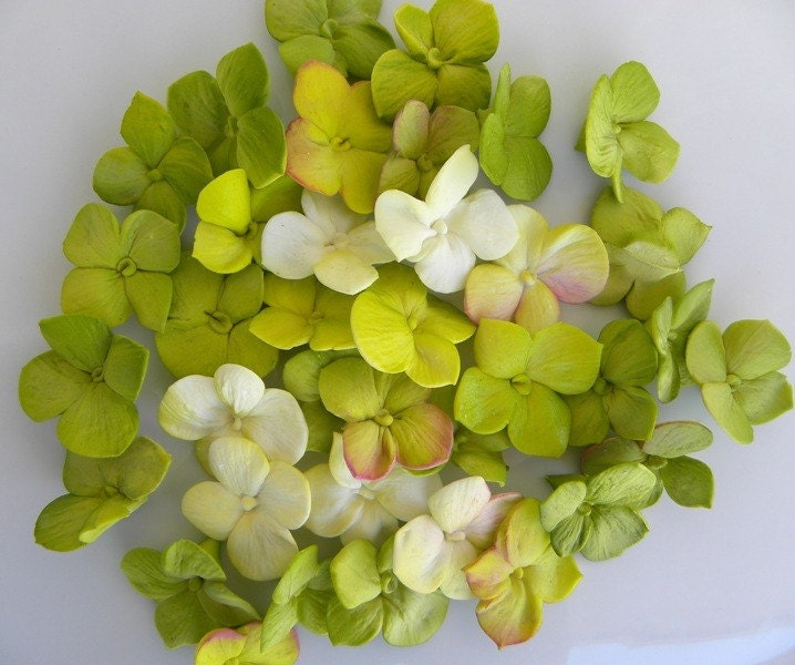 50 Sugar Hydrangea Singles- Any color