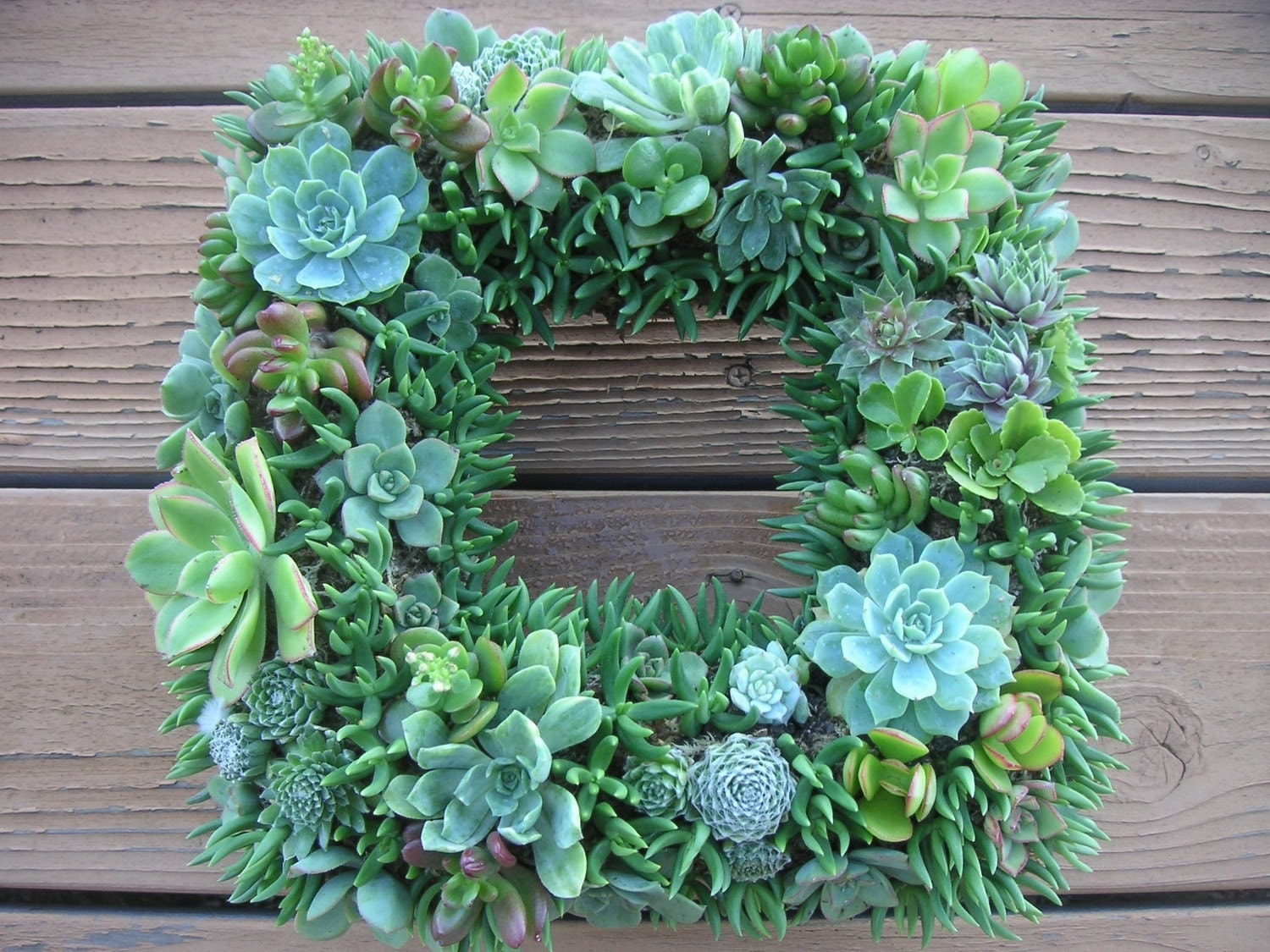 Beautiful Square Living Wreath Or Centerpiece, READY FOR DELIVERY
