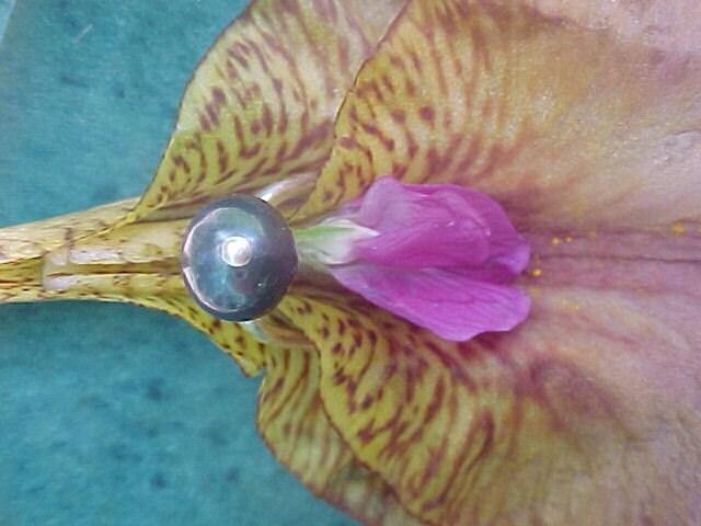 female genital piercing jewelry. tattoo piercing jewelry is put