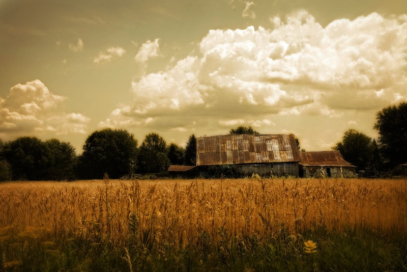 Farmhouse Decor - Barn Photography - Landscape Photography - Wheatfield County - Barnyard Photo - Quebec Canada 8x12 Print - TheLonelyPixel
